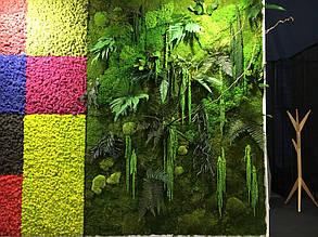 Картины из стабилизированных растений  -1