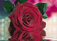 Фотообои *Алая роза* 140х196