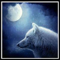 NAIYUE X009 Ночной волк Животный принт Алмазная живопись Алмазная вышивка