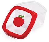 Контейнер для храниния помидор, фото 2