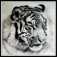 NAIYUE AE0041 Тигровая печать для рисования Алмазная вышивка Алмазная вышивка черно-белый