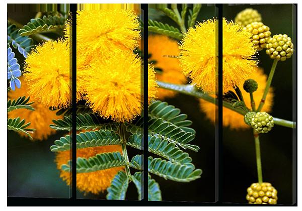 Модульная картина желтые бутоны Мимозы  (картина из 4- х частей)