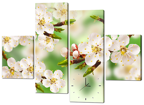 Модульная картина с часами Белые цветы Сакуры