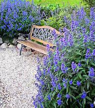 "Каріоптеріс ""Kew Blue"""