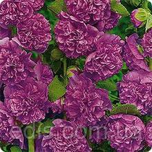 Мальва махровая Фиолетовая 0,3 г