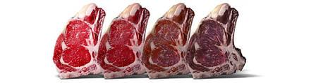 Шкаф для созревания мяса STG Meat 700 VIP (AC9005) Everlasting (Италия), фото 2