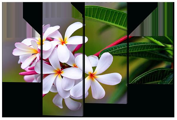 Модульная картина Белые цветы
