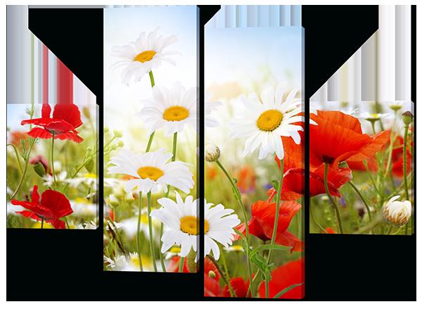 Модульная картина цветы Ромашки и маки