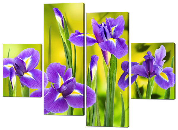 Модульная картина цветы Ирис