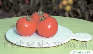 Семена томата Полфаст F1 5 грамм Bejo