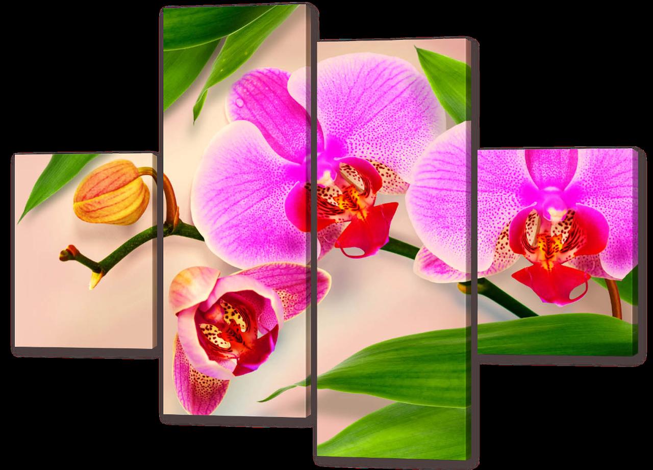 Модульная картина Орхидеи