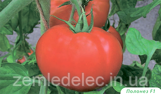 Семена томата Полонез F1 5 грамм Bejo