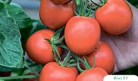 Семена томата Ричи F1 5 грамм Bejo