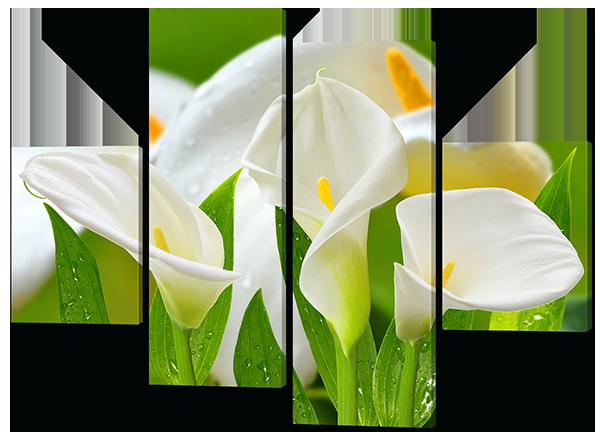 Модульные картины цветы Каллы