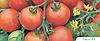 Семена томата Тести F1 5 грамм Bejo