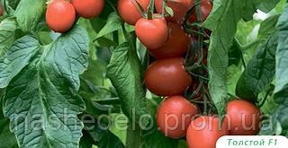 Семена томата Толстой F1 5 грамм Bejo