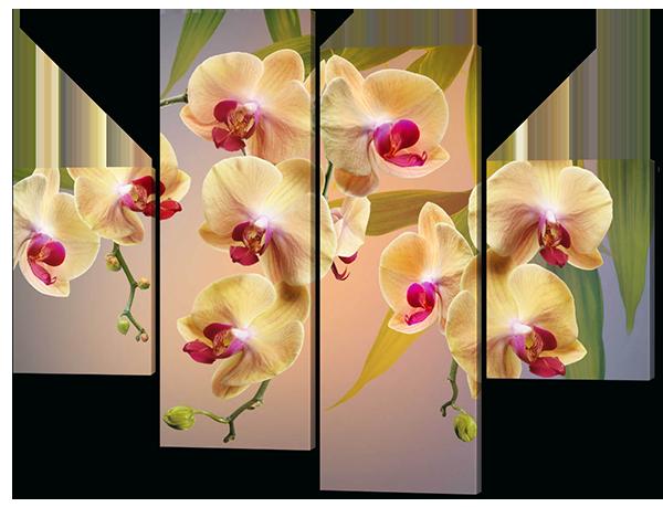 Модульная картина Красивые Орхидеи
