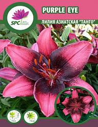 Лилия азиатская  танго Purple Eye