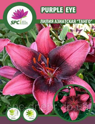 Лилия азиатская  танго Purple Eye, фото 2