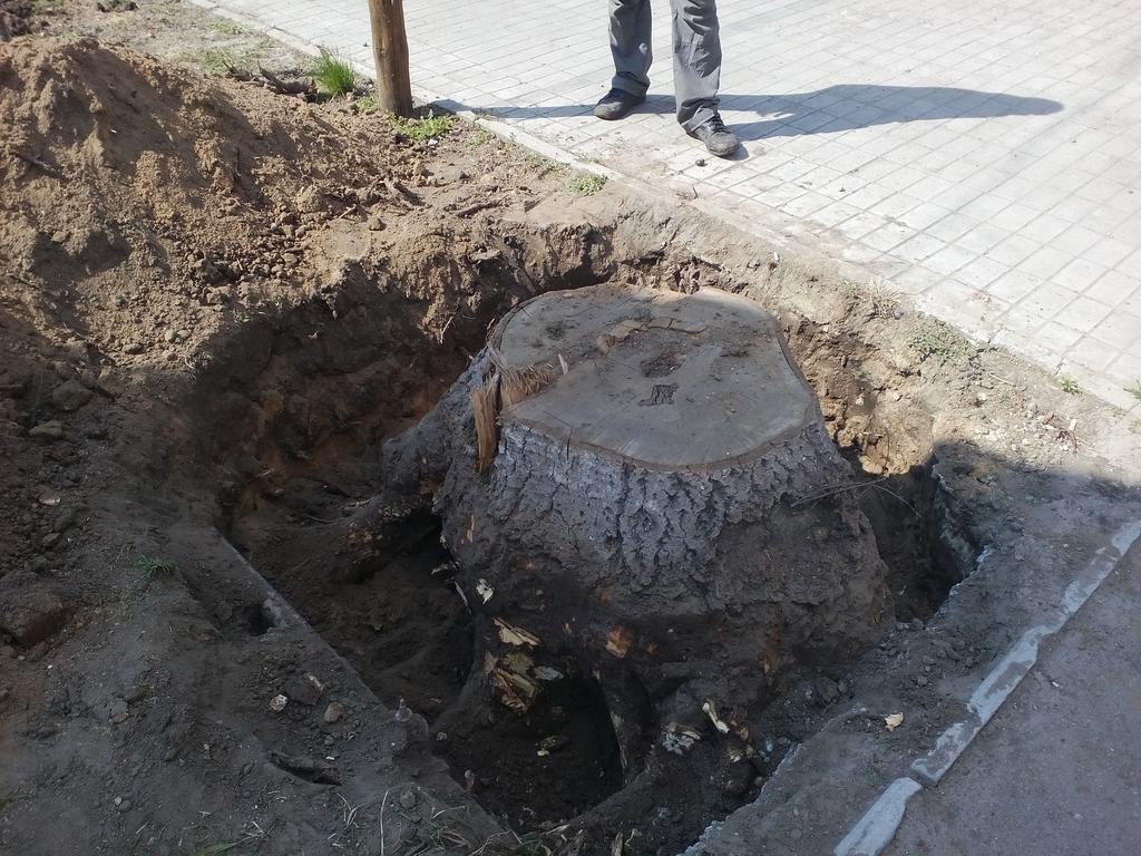 Выкорчёвывание  трёх пеньков диаметром выше 50см по ул.Ушакова г.Херсон 3