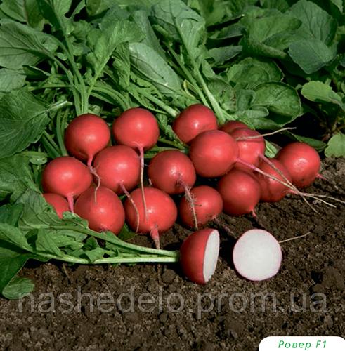 Семена редиса Ровер F1 50000 семян (2,75-3,00 мм) Bejo