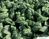 Семена шпината Спирос F1 50000 сем. Bejo