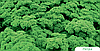Семена петрушки кучерявой Петра 500 грамм Bejo
