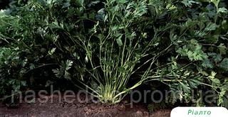 Семена петрушки листовой Риалто 50 грамм Bejo