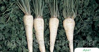 Семена петрушки корневой Арат 500 грамм Bejo