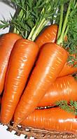 Морковь Абако F1  Голландия (100шт), фото 1