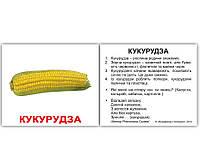 "Карточки мини украинские с фактами ""Овочі"" 40 карт. в кул 8*10см, ТМ Вундеркинд с пел(096631)"