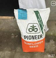 Семена подсолнечника Пионер P64LE99 (П64ЛЕ99)