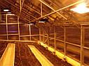 Теплица Вегетарий 3х4 Стандарт 4 мм, фото 8