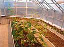 Теплица Вегетарий 3х4 Стандарт 4 мм, фото 9