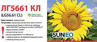 Семена подсолнечника ЛГ5661 КЛ, Лимагрейн LG 5661 CL Suneo