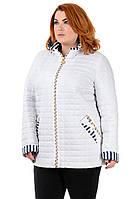 Женская куртка большого размера  от производителя 52-62