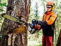 Валка и разкряжевка деревьев