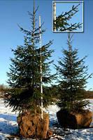 Выкопка деревьев