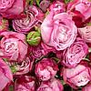 Роза спрей Lady Bombastik (Леди Бомбастик), корень ОКС