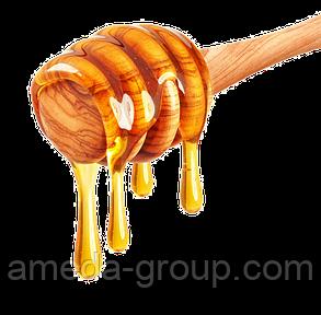 Подсолнечной мед натуральный, фото 2