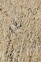 Костюм летний Jahti Jakt Archie light reed Camo армированный c защитой от москитов, фото 4