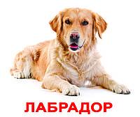 Карточки Домана Породы собак | Русские большие карточки с фактами Вундеркинд с пеленок