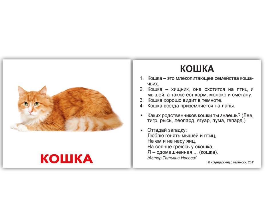 секрет, описание домашних животных с картинками кузену
