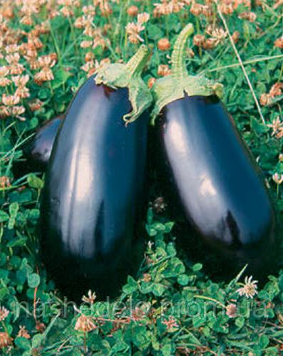 Семена баклажана Анет F1 1000 семян Nunhems