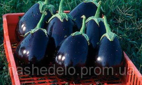 Семена баклажана Тиррения F1 1000 семян Nunhems