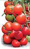 Семена томат ТАЙЛЕР F1 500 сем. Китано