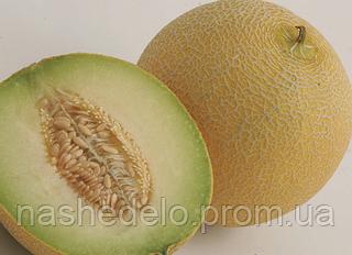 Семена дыни Воллер F1 1000 семян Nunhems