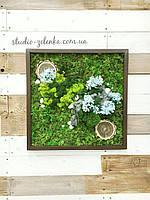 Картина из стабилизированного мха и растений.