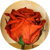 Вечные розы Кофейный топаз