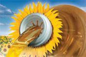 Семена подсолнечника НК БРИО,  Среднеранний, А–Е, Высокоурожайный, Сингента / Syngenta. Урожай: 2016г.